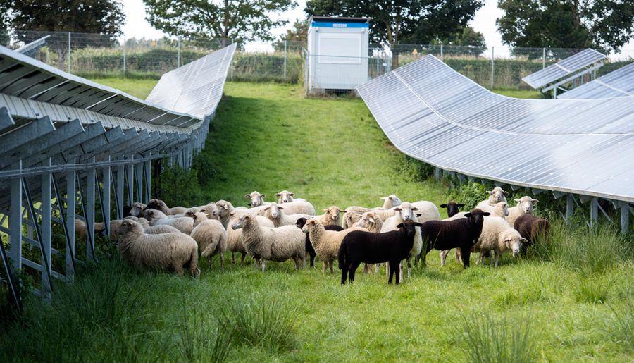 Prysmian liefert TECSUN Solarleitungen für den größten Solarpark Deutschlands